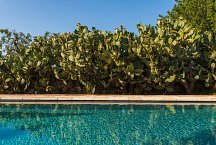 Masseria Marvicino_pool with Indian Fig