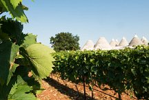 Nina Trulli Resort_vineyard
